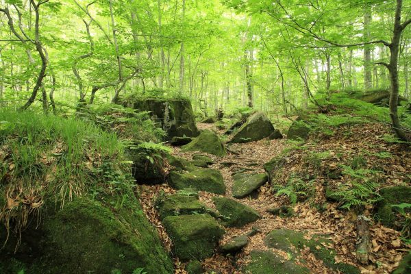 Dakedai Forest in Fujisato Town