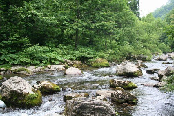 Stream running alongside Kurumidai camping ground.