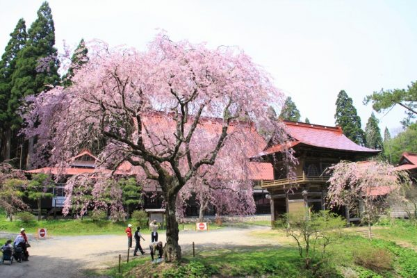 Tahoin Temple in spring.