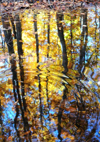 Reflections in Dakedai Forest