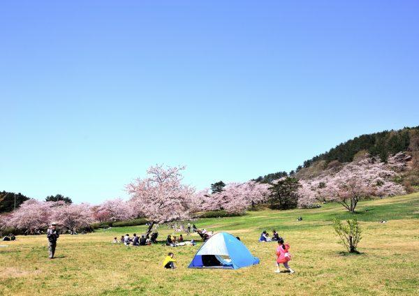 Goshonodai camping in spring