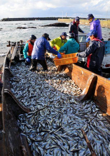 Hatahata fishing in Happo Town.