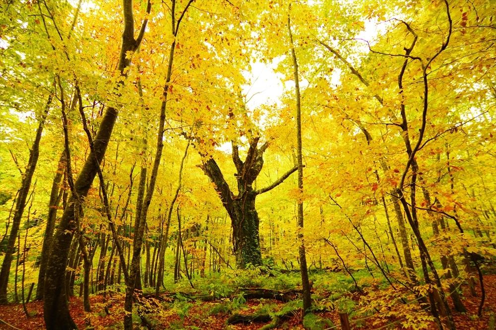 Dakedai Forest in autumn.