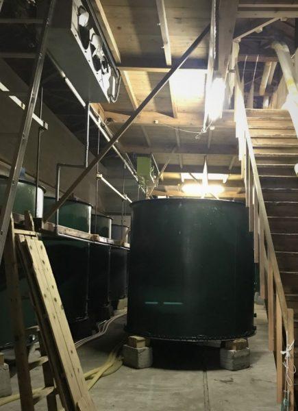 Inside Yamamoto Sake brewery in Happo Town.