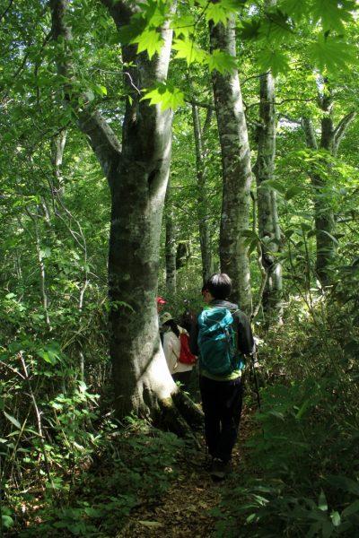Hiking Mt. Kodake in Fujisato Town.