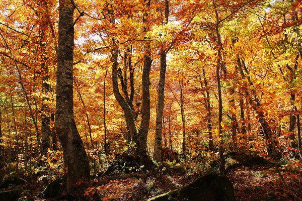 Dakedai in autumn 2