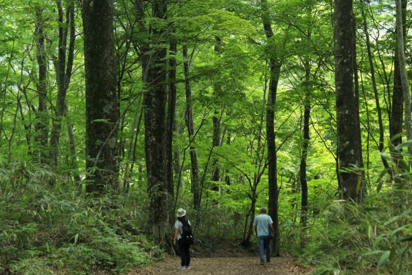Strolling through the beech forests of Juniko Lakes.