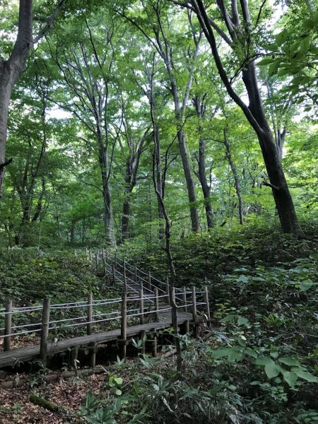 Walking path in Tomeyama Forest in Happo Town.