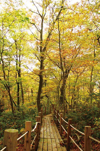 Tomeyama Forest in autumn.