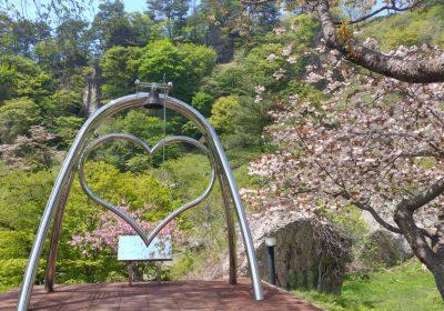 きみまち阪桜